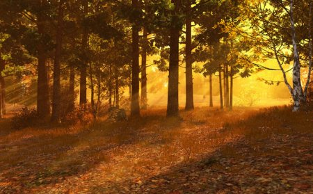 Autumn Forest 3D Screensaver and Animated Wallpaper 1.0 Build 1